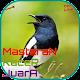 Download Masteran Kacer Juara OFFLINE For PC Windows and Mac