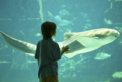 Bahamas-Atlantis-aquarium.jpg - Visit the omnipresent Atlantis resort and its aquarium during your port visit in Nassau.