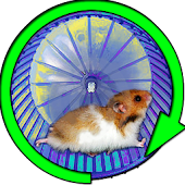Hamster In a Wheel Desert
