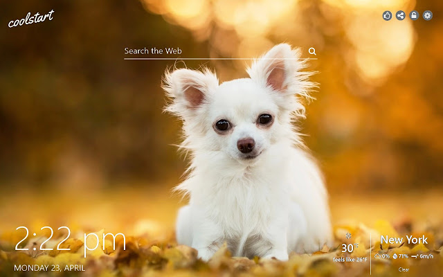 Chihuahua HD Wallpapers Dogs N Puppies Theme