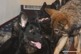 Photo: Sifra en Dumaj zijn 8 poten op 1 hondenbuik