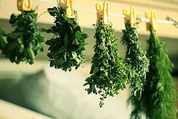Fresh Versus DriedFresh herbs have a bold (out of the garden) taste, and are...