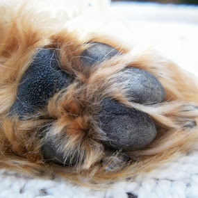 Puppy paw by Marilyn Kruger - Animals - Dogs Portraits