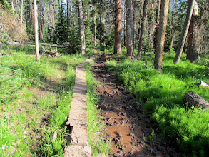 Photo: Mucky trail