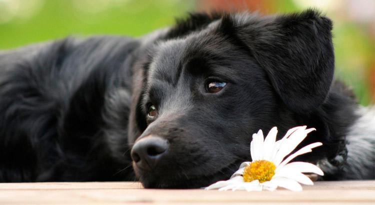 Quanto tempo dura o cio de uma cadela