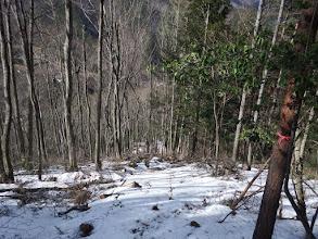 伐採地(獣の足跡を頼りに)