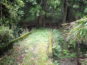 橋を渡ると植林帯に
