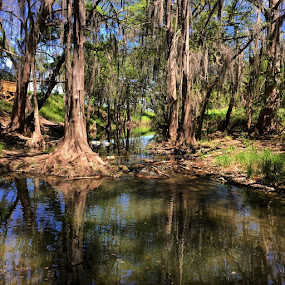 Medina River, Castroville by Roxana McRoberts - Instagram & Mobile iPhone