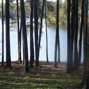 Atlanta by Brianna Janke - Landscapes Travel