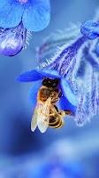 Screenshot of Bee Live Wallpaper