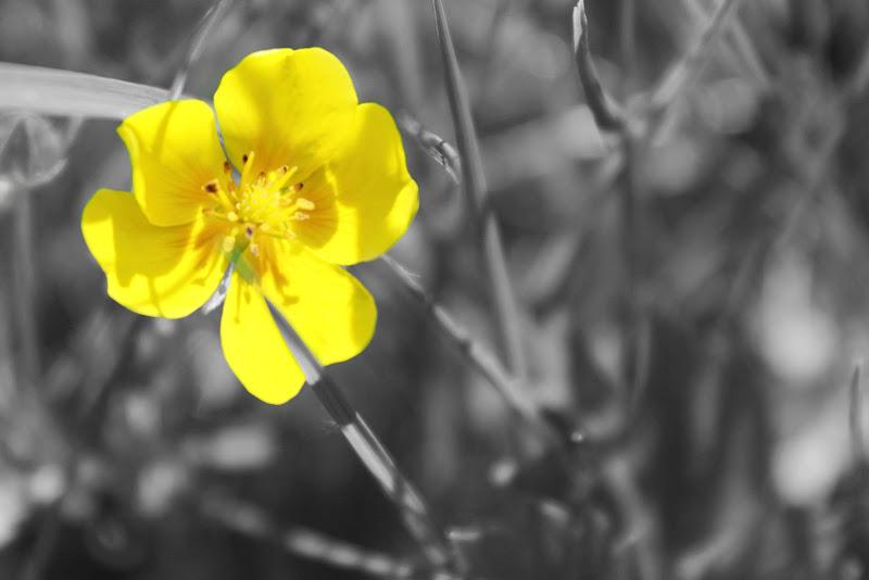 flower di Luigia