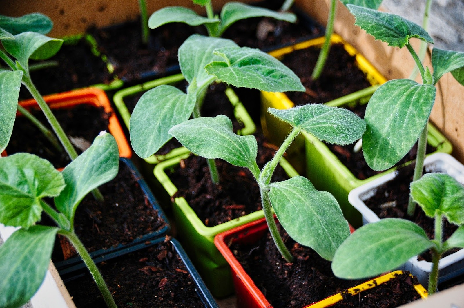 Reutilização de resíduos para fazer adubos é uma maneira de tornar agronegócio sustentável (Fonte: Pixabay)