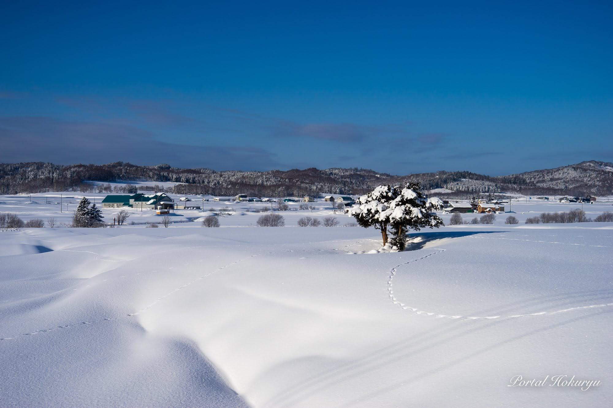 雪上の可愛い足跡