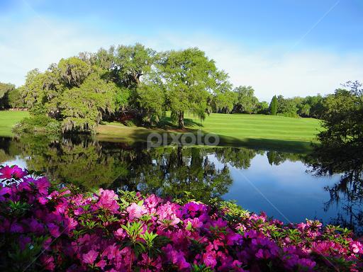 https://www.pixoto.com/images-photography/flowers/flower-gardens/savannah-ga-garden-4832498050138112.jpg