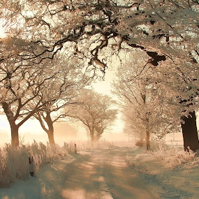 Meadow Lane Frosty Sunrise by Andy Barrow - Nature Up Close Trees & Bushes ( winter, dawn, icy, wonderland, snow, frost, snowy, sunrise, frosty )