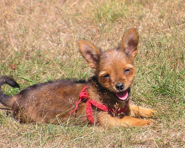 cane felice di aleimage
