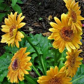 by Denise O'Hern - Flowers Flower Arangements