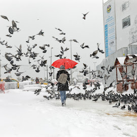 Kar_kuş by Veli Toluay - City,  Street & Park  Street Scenes ( kar, kış, fırtına, eminönü, istanbul,  )