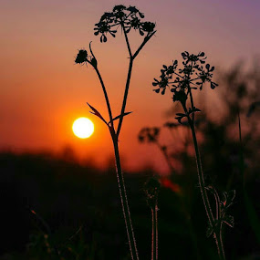 by Manash Kaushik - Landscapes Sunsets & Sunrises