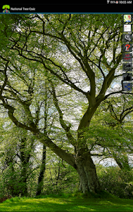 Tree Quiz Game- screenshot thumbnail