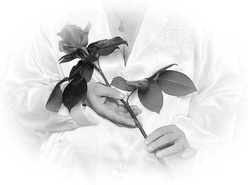Una rosa per Te di Tacca