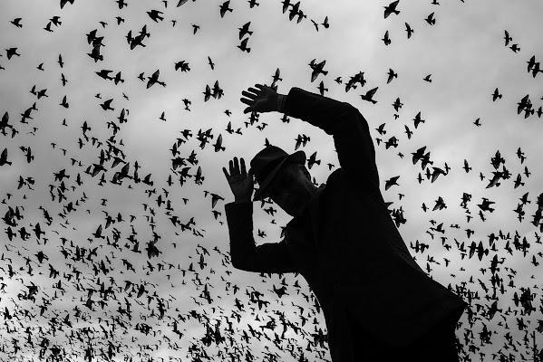 Birds di renzodid