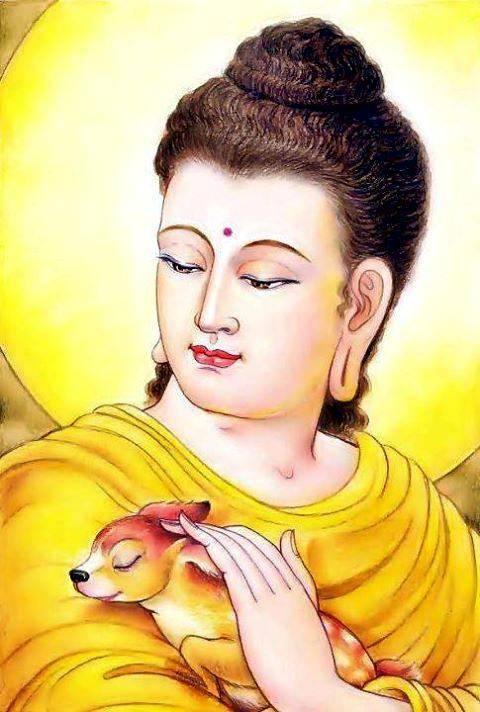 Tâm từ bi của đức Phật Thích Ca Mâu Ni