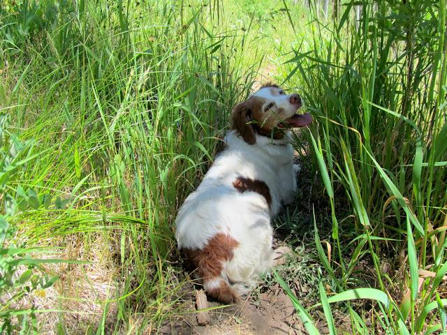 Torrey taking a break in the shade