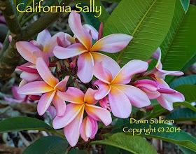 Photo: California Sally Lakeside, CA