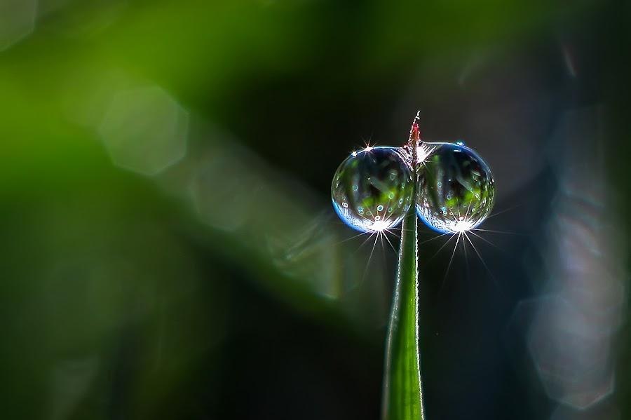 duo..... by Kawan Santoso - Nature Up Close Natural Waterdrops (  )