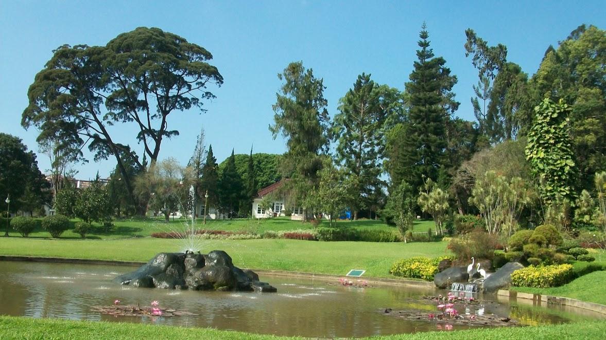 Salah satu taman di Istana Cipanas