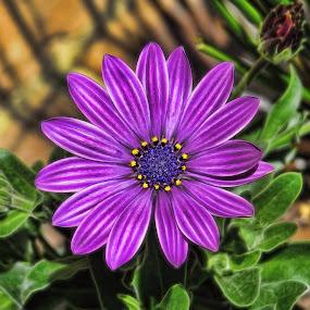 by Stacy Knighton - Flowers Single Flower