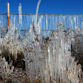 Frosty Morning on the farm by Ann Marie - Landscapes Weather ( cold, ice, frost, frozen, icecycles,  )