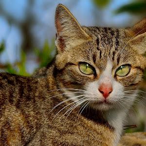 Feb 10 cat.jpg