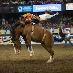 Bucking Bronco by Eric Peek - Animals Horses ( rodeo louisville ky bucking horse bronc )