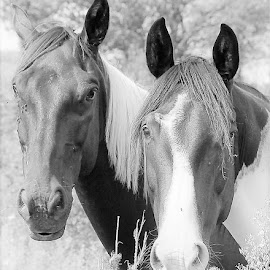 Two Bros by Linda    L Tatler - Black & White Animals