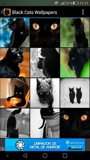 Black Cats Wallpapers