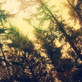 Look up by Kaja Radošević - Landscapes Forests