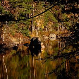 Fall sun by Alf Winnaess - Uncategorized All Uncategorized