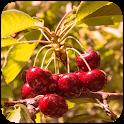 Fruit Trees Wallpaper HD icon