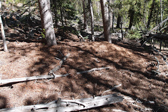 Photo: We camped on a logging spur off the top of the pass--about a mile of Syncro road.  In the morning we climbed a knob on the ridge to see if there was a view.  Going up, I saw this pile where a squirrel or squirrel family has gone through many cones for a long time.