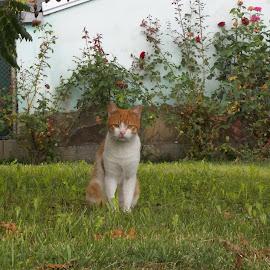 Котка by Georgi Kolev - Animals - Cats Portraits ( стена., трева., котка., ден., светлина., рози. )