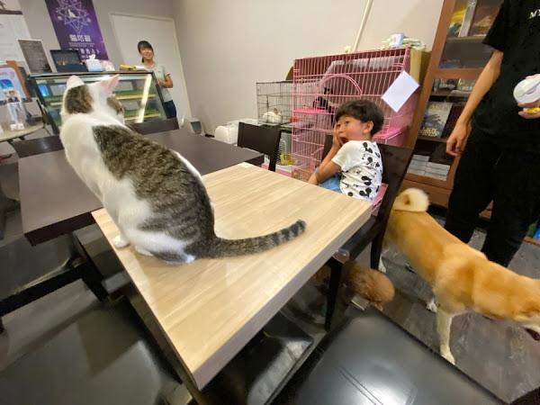 魔法咪嚕寵物主題餐廳,跟可愛毛小孩一起用餐吧!