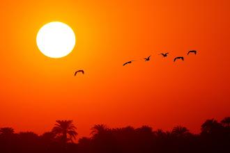 Photo: Sunset at the Nile