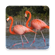 Download PINK FLAMINGO Wallpaper For PC Windows and Mac