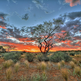 The Granites by Steve Hatton - Landscapes Prairies, Meadows & Fields ( the granites, the pilbara, mount magnet, sunset, australia, landscape., western australia )