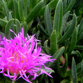 Windhoek by Rebecca Imwalle - Nature Up Close Flowers - 2011-2013 ( green, pink, africa, flower )