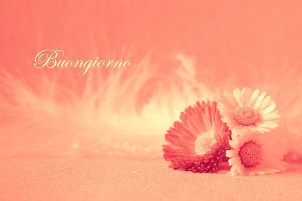 Dillo con un fiore di Furlissima