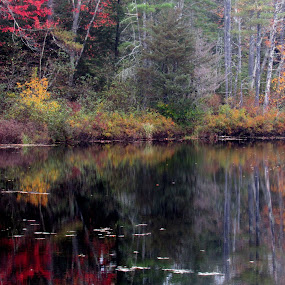 Foliage and Reflection at Haybrook by Lynne Miller - Uncategorized All Uncategorized ( water, lynne miller, alfred maine, maine, foliage )