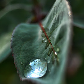 leaf and drop by Cristobal Garciaferro Rubio - Abstract Water Drops & Splashes ( drop, drops, leaf, leaves, bokeh )